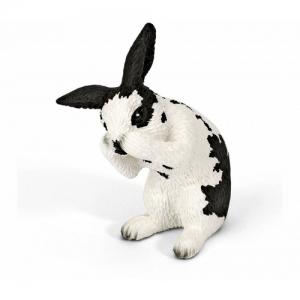 Домашние животные кролик моет мордочку 13698